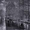 Arboretum Ellerhoop_0418__DSF2295-IridientEdit