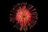FSF 003 Protea