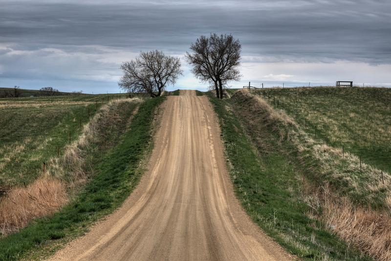 Country Road and Bare Trees - S. Dakota