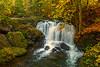 WF1 Whatcom Falls, Bellingham WA