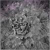 Plant Studies11172012_060
