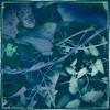 misc  plants_01cyan10 87