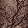Schlipf Oak