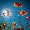 DavidDavis garden5_10_77