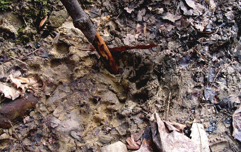 Rebecca finds strange footprints at end of hike.