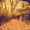 Fall Foliage New York City - Central Park Path