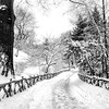 Central Park Winter Path - By Vivienne Gucwa  I think back to days spent wrapped in the cold silence of freshly fallen snow in Central Park.   The labyrinth-like path leading from Shakespeare Garden lined by a wooden fence twists and turns in the snow winding its way under trees whose branches reach out to each other like eager arms awaiting the warmth of an embrace.  It's on days like this when the sun rests longer than usual and winter's essence seeps through every crack and crevice that the earth quivers a ghost shiver that rests in summer's memory.  ---  This photo was taken during a major snowstorm in New York City. The rustic wooden fence rests on a four acre section of Central Park known as the Shakespeare Garden which is located in the west part of the park near 79th Street. On the 300th anniversary of William Shakespeare's death in 1916, this area was dedicated to Shakespeare and named. The plants and flowers that are found in this area are all mentioned in the works of the playwright and are also plants and flowers that are found in his garden in Starford-upon-Avon. There is even a white mulberry tree on this four acre plot of land that is said to have grown from a graft of a tree planted by Shakespeare himself in the 1600s.   While the paths that winds through Central Park's Shakespeare Garden is gorgeous in the warmer months of the year, it's absolutely stunning when snow has freshly fallen.  ---