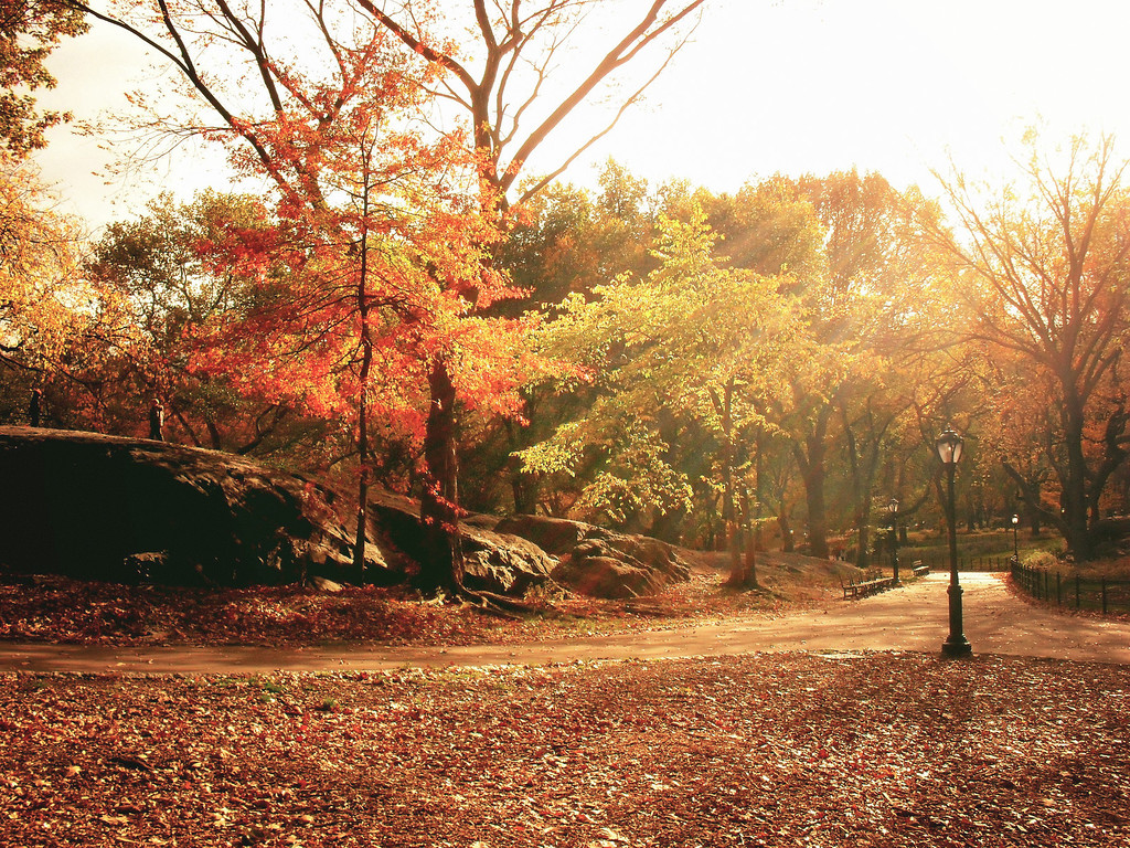 New York Autumn - Central Park - Trees and Fall Foliage