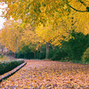 Fort Tryon Park - Autumn - New York City