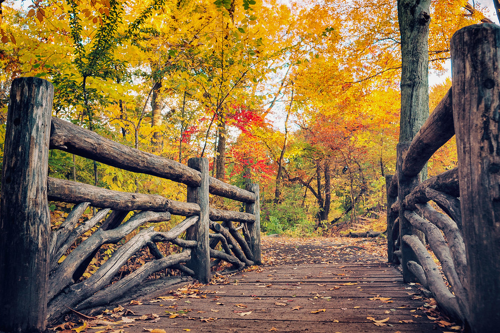 New York Autumn - Central Park Rustic Bridge and Trees