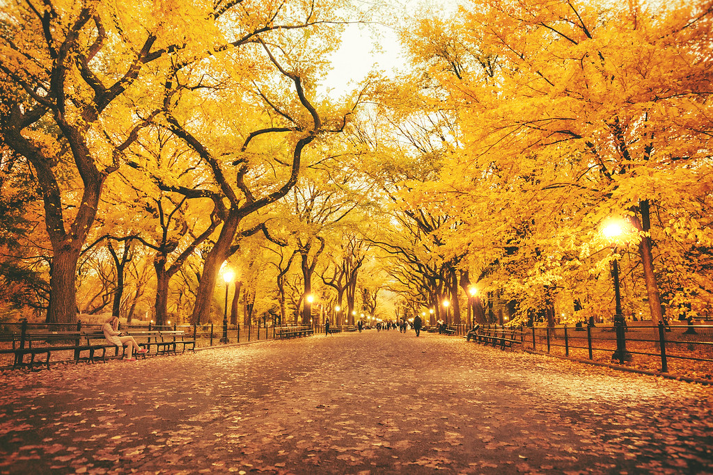New York Autumn - Central Park - Poet's Walk - Dusk
