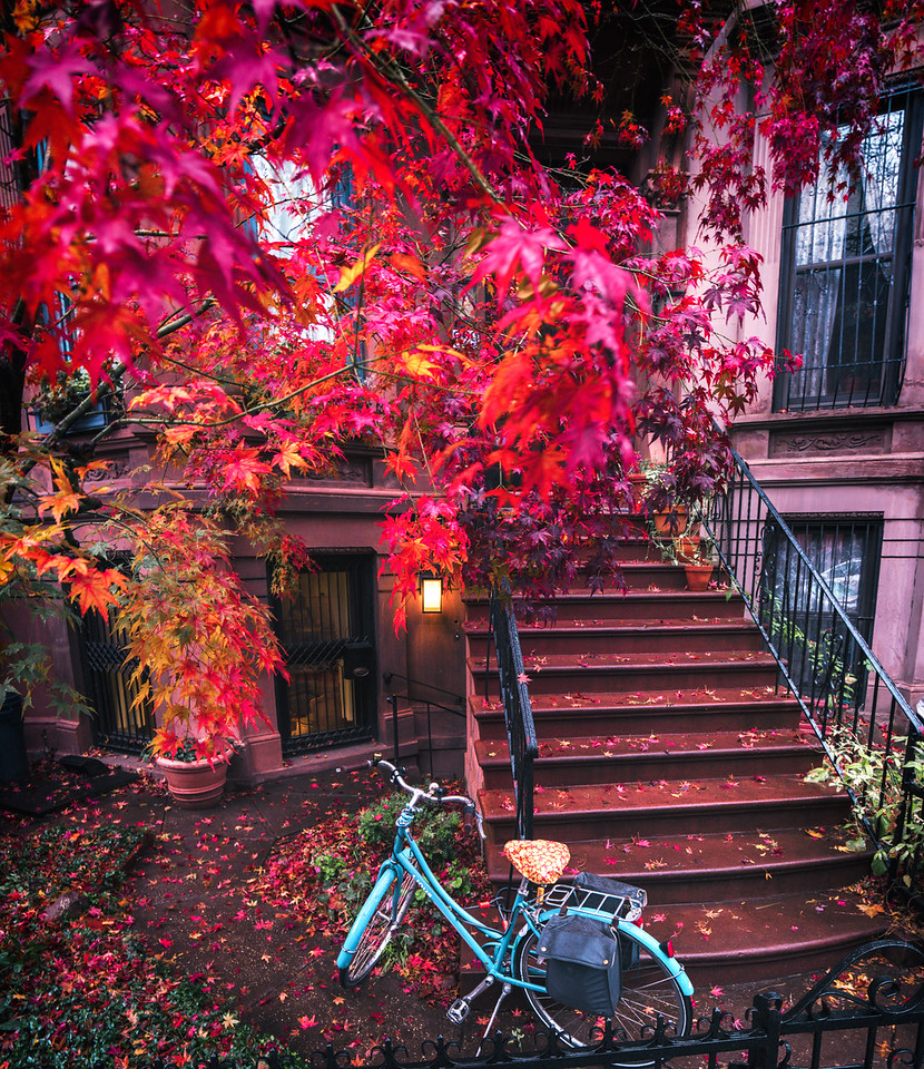 Brooklyn Autumn - New York City