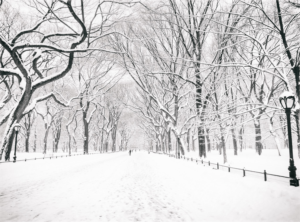 Central Park Winter - Poet's Walk - New York City