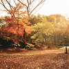 Autumn Warmth - Fall in Central Park