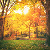 <h2>Autumn Light Through Trees - Central Park - New York City</h2> - By Vivienne Gucwa<br><br>  In autumn, sun drips down like melted gold on tree limbs decorated in the finest foliage. <br><br>  The earth, chilled by the memory of winter, holds onto the sun's light with hands outstretched as each ray slips through its fingers like fine sand.<br><br>  As bitingly cool air brushes past flushed faces, every bit of sunlight clings to the earth like embers fallen from a powerful fire. <br><br>  ---<br><br>  I love the brisk quality of light in the autumn especially in the evenings. It's as if the sun is trying to penetrate through past winter all the way forward into spring.<br><br>  ---<br><br>