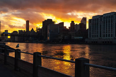 Manhattan Skyline at Sunset from Roosevelt Island, New York City