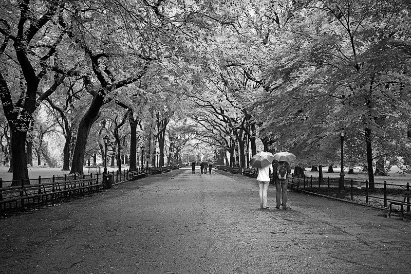 Rainy Day on Poets Walk, Central Park - New York City