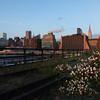 High Line Wild