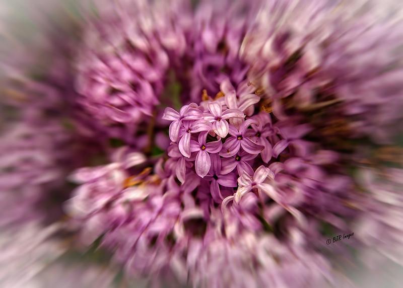 Lilacs Blur