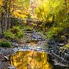 Stream in Robert Treman State Park