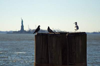 Birds and Liberty