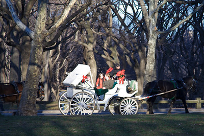 Horse and Carriage - Central Park