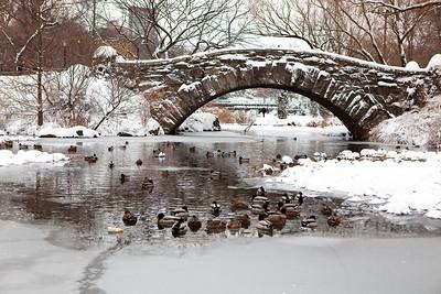 Central Park Winter 2009-2010