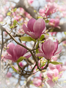 Christchurch Spring