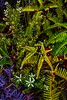 A potpourri of vegetation at Volcanoes Nat'l Park.<br /> Photo © Carl Clark