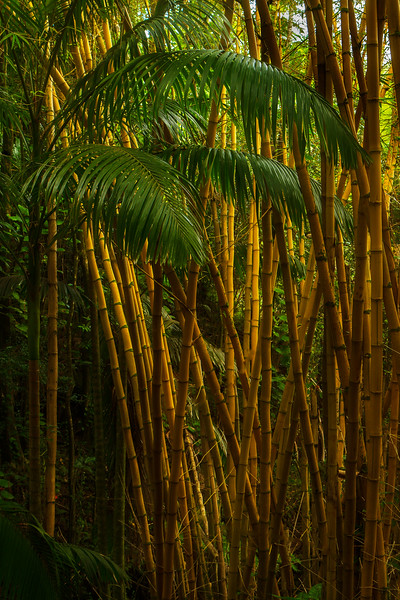 The east side of the Big Island has lush forests.<br /> Photo © Cindy Clark