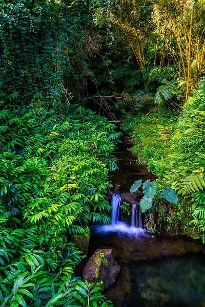 A small stream flowing amid the thick vegetation at Akaka Falls State Park on the Big Island.<br /> Photo © Carl Clark