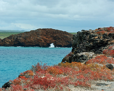 South Plaza Island, Galapagos, Ec
