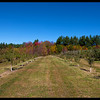 Apple orchard in Walpole, NH