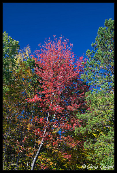 A single pretty tree in VT