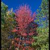 A single pretty tree in VT