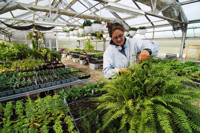 The greenhouses and staff horticulturalists create an environment where inner city children and adults can experience the wonders of plantlife in a form other than weeds growing up between cracked asphalt parking lots.