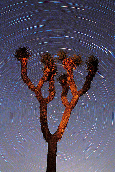 #203 Joshua Tree & Star Trails, Joshua Tree NP, CA