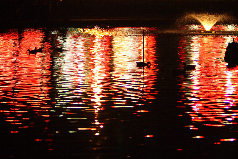 Ducks swimming in the park pond aided by the light of a beautiful TEXACO station.