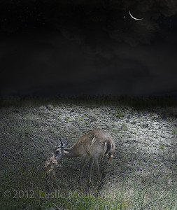 Doe-and-Fawn-in-Moonlight-158