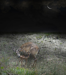 Doe-and-Fawn162