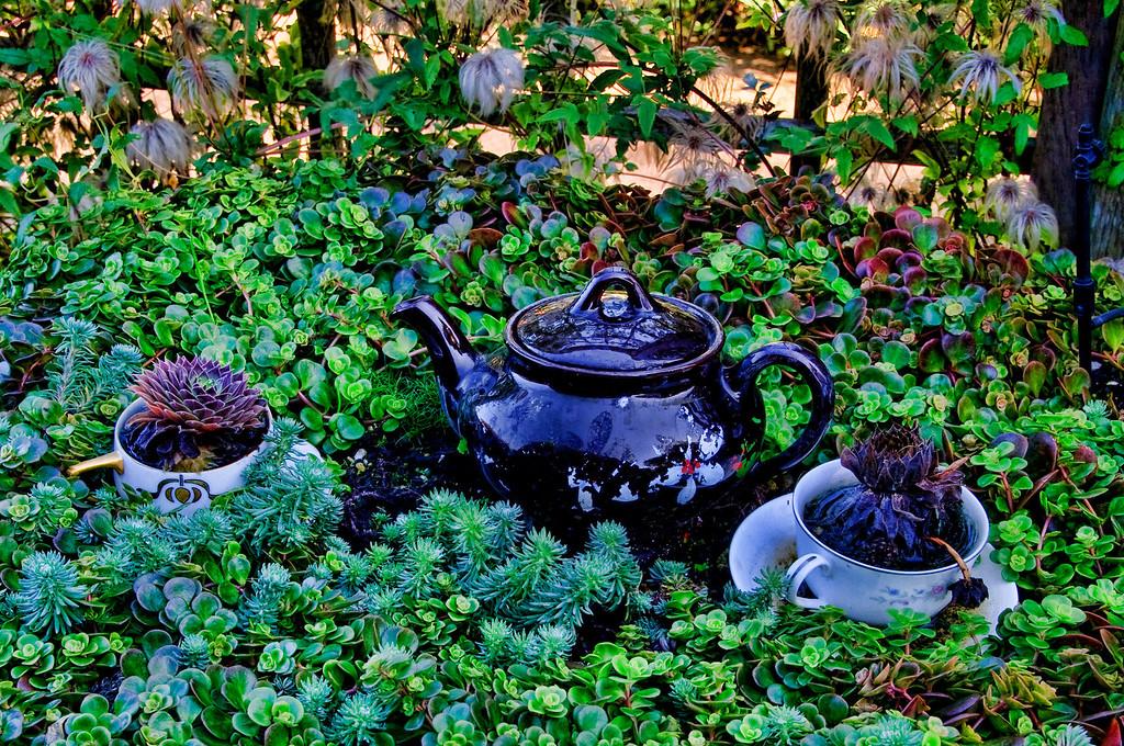 Herble Tea_edited-1