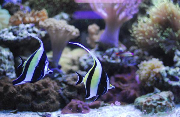 Reef Raft