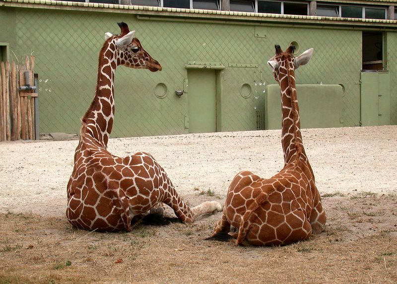Friends at Rotterdam Zoo.