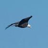 Bald Eagle 11-19-17 Rangeland Road