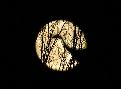 Nocturnal Illuminations