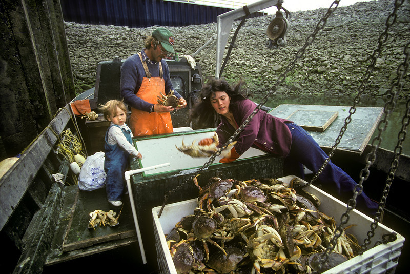 Harvesting Dungeness Crabs, Homer, Alaska