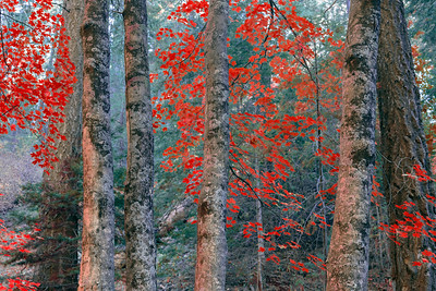 Autumn on Mt. Lemmon, Arizona