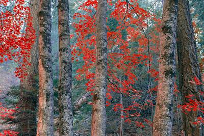 Autumn on Mt. Lemmon, Arizona