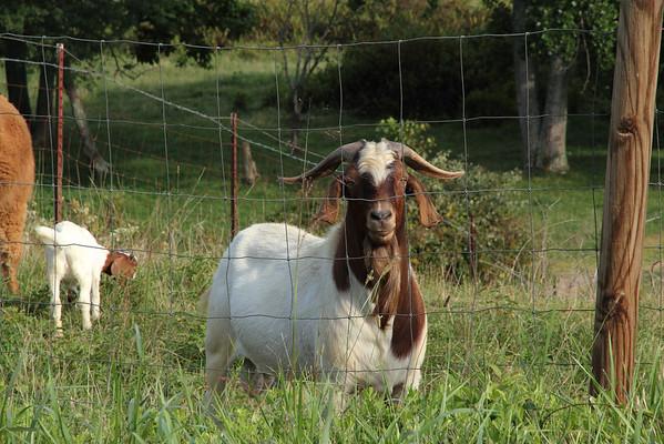 William E. Goat