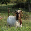 William E. Goat